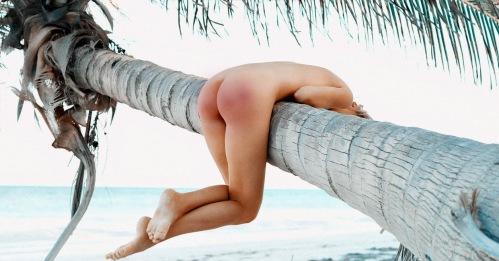 1wr palm